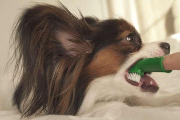 Dog Toothbrushing